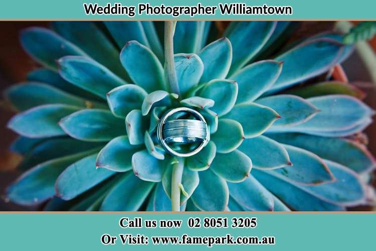 Photo of the wedding ring design at the top of the plant Williamtown NSW 2318
